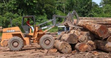 desmatamento011