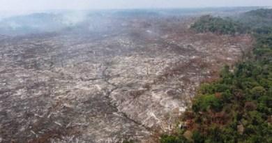 (desmatamento Flona Jamanxim em Novo Progresso - Foto Divulgação IBAMA)