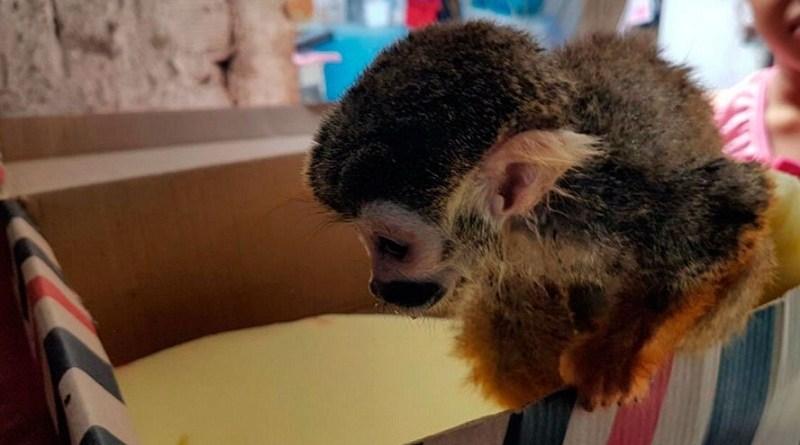 destaque-393815-macaco