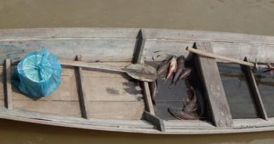 pesca-acari