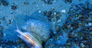 RTEmagicC_coral-amazonia-greenpeace_01.jpg