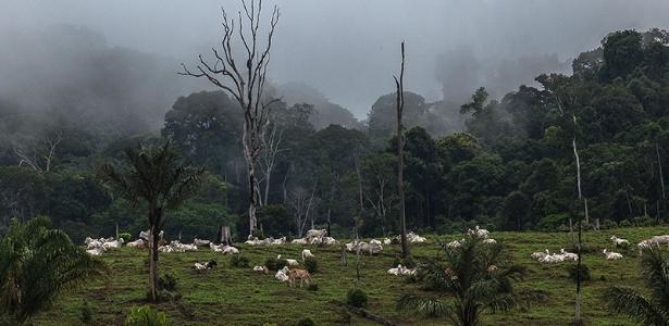 (Lilo Clareto/Repórter Brasil)- Na região do Tapajós, no Pará, sobe o tom contra lideranças rurais que não cedem aos interesses de madeireiros, garimpeiros e fazendeiros
