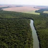 Pará- Novo progresso lidera desmatamento no 1º tri e Estado pedem apoio do governo federal