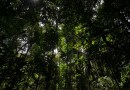 Brasil pode liderar 'nova economia florestal' com reflorestamento de espécies nativas e madeira certificada