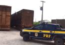 PRF apreende 160 cabeças de bois transportados de forma irregular em Altamira