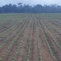 Com mais chuvas produtores de Novo Progresso aceleram plantio da soja