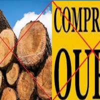 Juíza proibi extração de madeira e manda fechar compra de ouro de Novo Progresso e outros 25 municípios da Amazônia