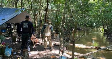 Os fiscais encontraram e apreenderam 41m³ de madeira em tora e 25m³ de madeira serrada sem autorização Foto: Ascom / Semas