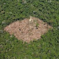 Progressense na lista dos 25 maiores desmatadores da Amazônia - Saiba quem são eles;