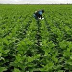 Adepará convoca produtores de soja para realizarem cadastro da safra 2020/2021