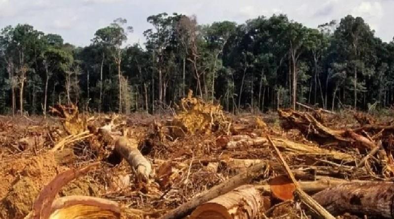 BBC Desmatamento na Amazônia atingiu em 2020 o maior índice dos últimos 12 anos (Foto: Getty Images)