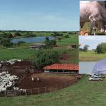 """Amado Batista """"mentiu"""" sobre fazenda de R$ 350 milhões"""