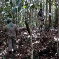 Desaparecido por três dias - homem que sumiu após descer de ônibus na Serra do Cachimbo é encontrado