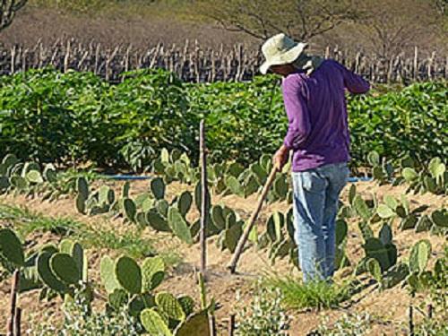 A interpretação da legislação agrária conforme a Constituição faz concluir que o Incra pode reivindicar propriedade da União