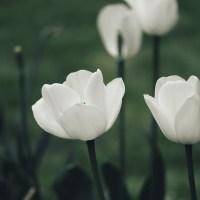 Sustentabilidade após a vida: conheça alternativas ecologicamente corretas