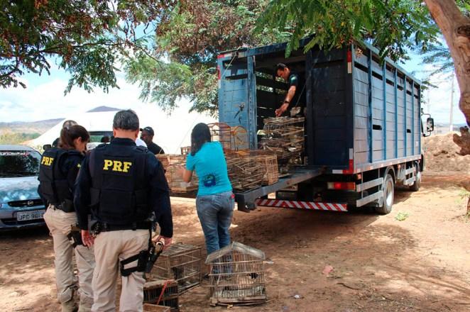 Operação Desdobramento flagra crimes ambientais e resgata animais silvestres na região da Bacia do Paraguaçu. Foto: Divulgação/PRF