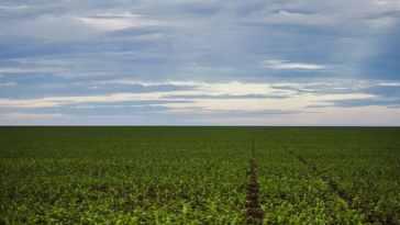 Segundo a Conab, a estimativa é colher 245,8 milhões de toneladas de grãos na safra 2019/2020. Foto: Marcelo Camargo/Agência Brasil