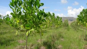 Alamanga-madagascar (Foto: Divulgação)