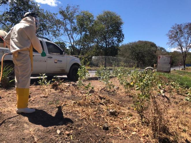 Eliminação das tigueras (Foto: Divulgação)