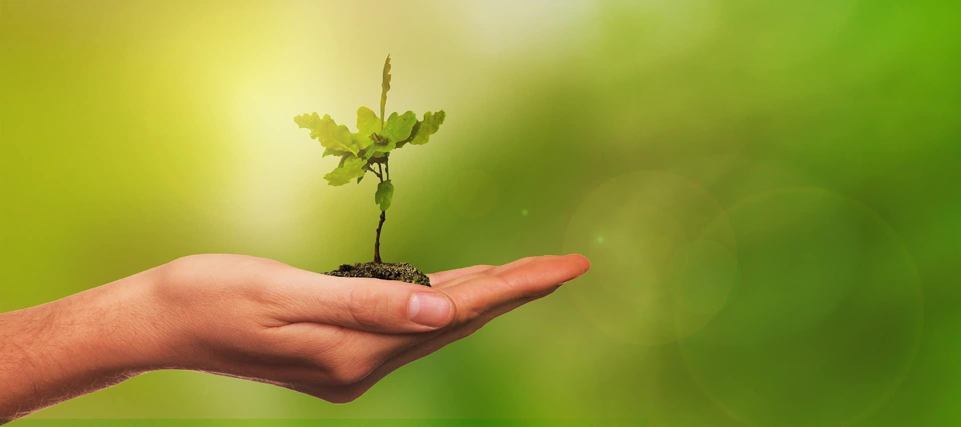 Pesquisa mostra que o uso de detergentes verdes pode economizar 50 mil toneladas de químicos anualmente no planeta