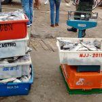 Polícia Ambiental apreende quase 170 kg de peroá em Guarapari