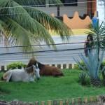 Lei proíbe uso de animais de grande porte em cidades capixabas