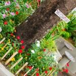 Praça de Anchieta é revitalizada por moradores