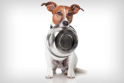 APPA realizará amanhã evento para arrecadar ração para gatos e cães