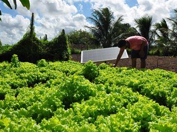 Agricultor da Paraíba usa energia solar para economizar gastos; veja como funciona