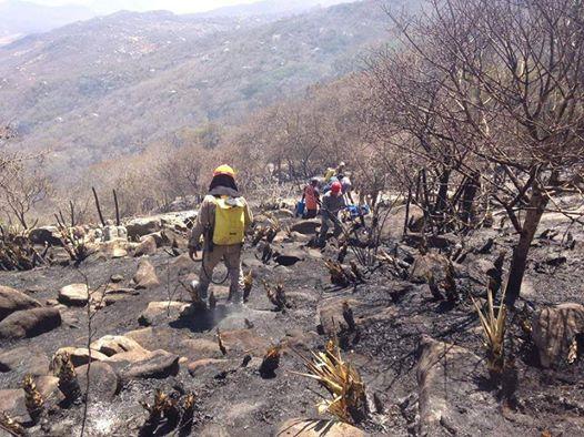 Comandante dos Bombeiros acredita que na tarde de hoje o incêndio no Jabre estará totalmente apagado