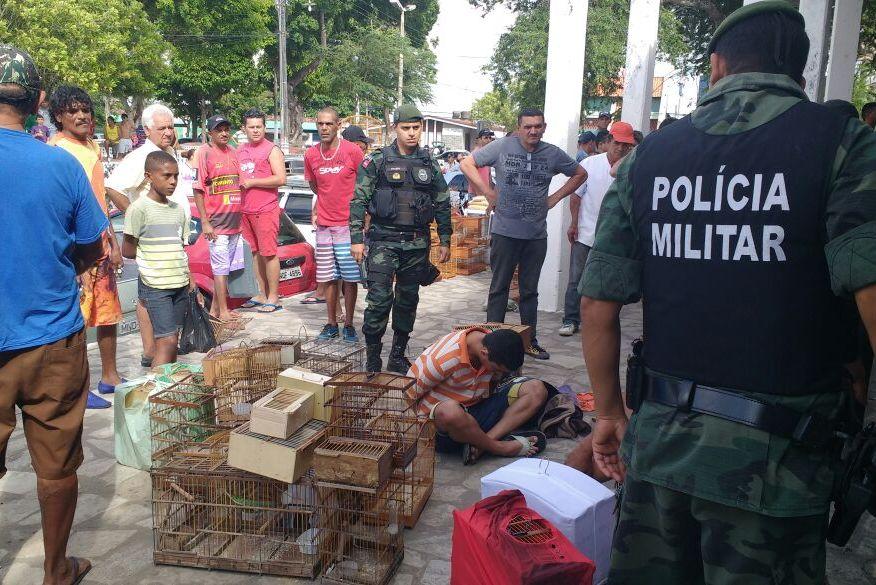 Polícia apreende mais de 80 aves e prende suspeitos de comércio ilegal