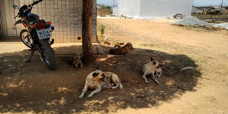 2ª Feira de arrecadação busca ajuda para animais de rua na cidade de Patos