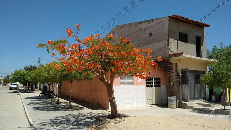 Belas árvores da cidade Patos