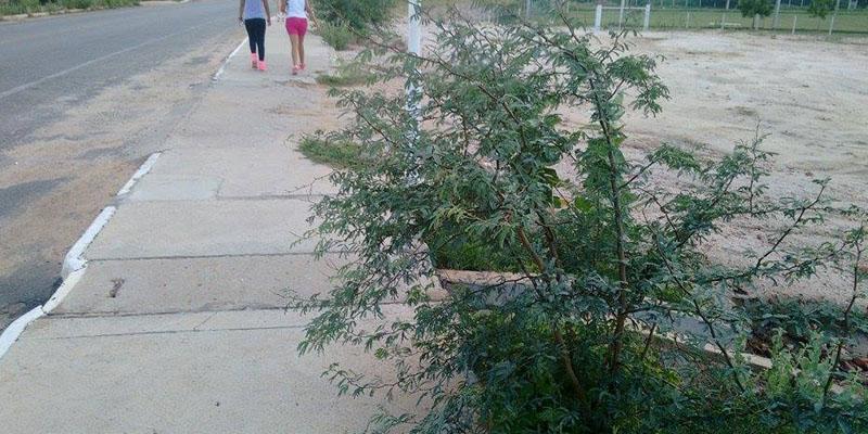 Praticantes de caminhada na Alça pedem que a Prefeitura faça o roço da vegetação lateral
