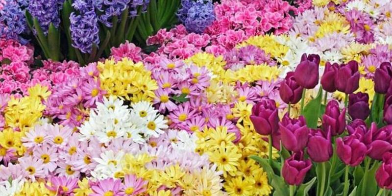 Organizadores prometem um grande Festival das Flores em Patos
