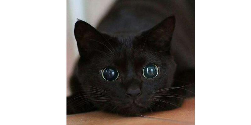 Cinco gatos para adoção. Confira fotos e informações