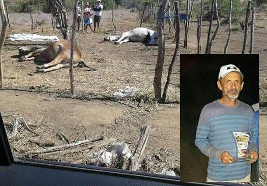 No Vale do Piancó produtor rural mata cavalo, boi e depois se mata