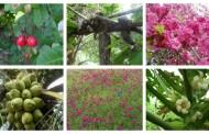 Natureza exuberante no Sítio São Braz em Pombal