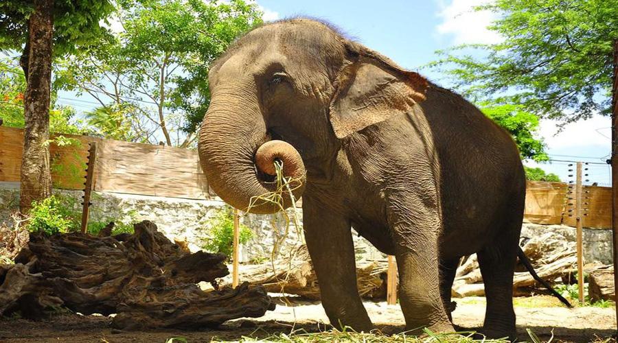 Promotor do Meio Ambiente de João Pessoa investiga tratamento inadequado de animais na Bica