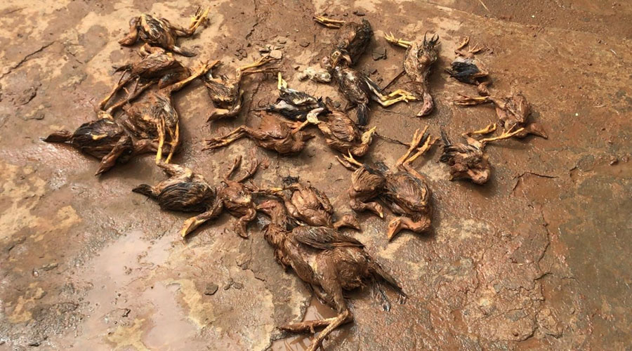 Chuva de 178 mm mata animais e destrói ruas em Farias Brito-CE