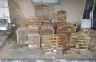 Policia ambiental apreende 18 aves silvestres em cativeiro em Itaporanga