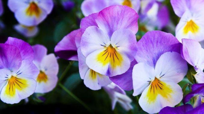 """Foligno in Fiore"""", scadenza 30 aprile per partecipare"""