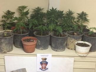 Foligno, coltiva marijuana all'interno dell'appartamento: arrestato dai Carabinieri