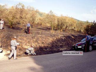 Scellerato dà fuoco ad un uliveto e poi scappa, arrestato dai Carabinieri