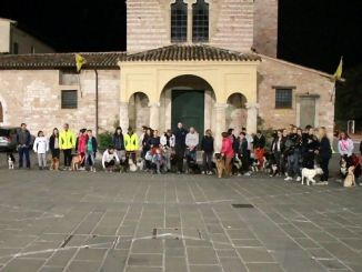 Passeggiata di gruppo in Centro a Foligno anche con i cani