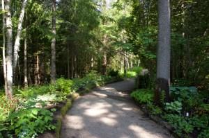groomed-path