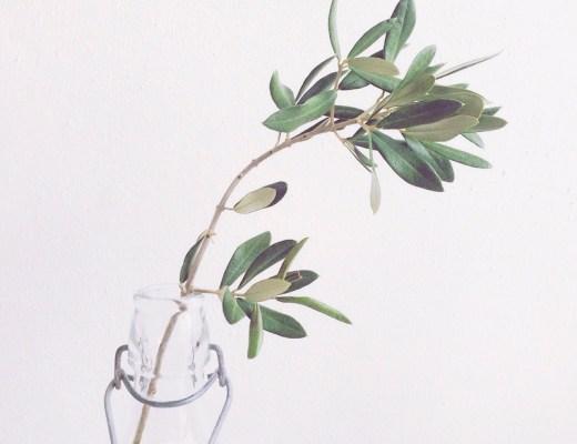 olivenzweig glück slowenien