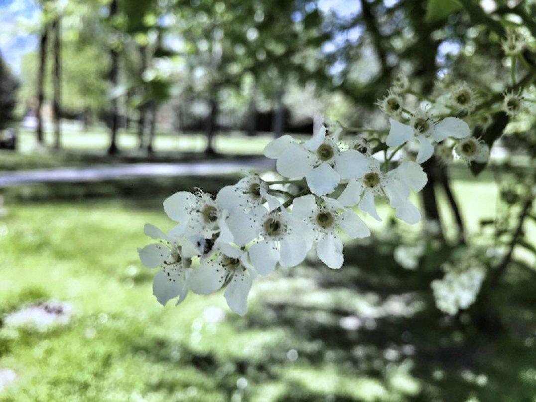 Springtime-Hellbrunn