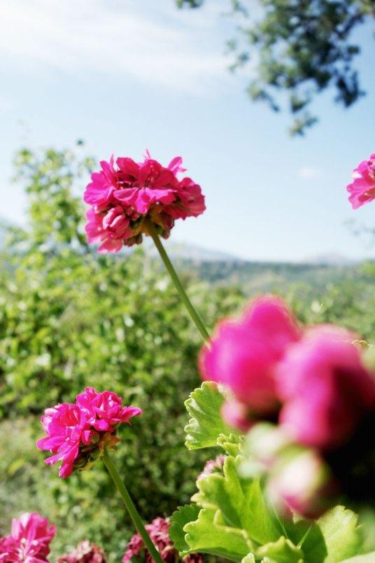Blumen-Natur-Kreta