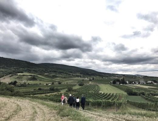 Weinwanderung Baden